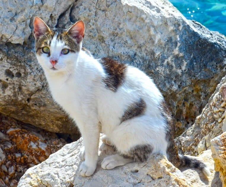 Katze Ithaki